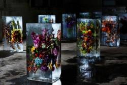 «Ледяные цветы» Азума Макото