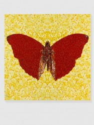 Бабочки Демиен Герста
