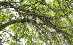 Метафизика дерева