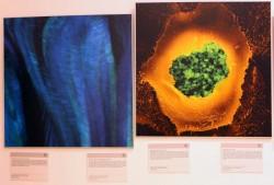 Картины из мира науки