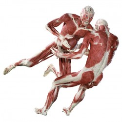 Выставка мертвых тел