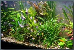 аквариумные композиции