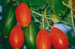 красные огурцы со вкусом киви